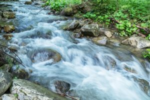hikes along forest streams